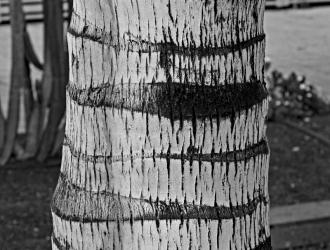 Tree-tunk